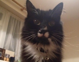 missing cat from Maynooth