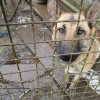 Dogs and puppies found living in squalor with no access to food, water or adequate shelter