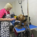 Washing and grooming at the ISPCA