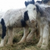Two ponies rescued from cliff face in Co. Waterford