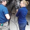 The ISPCA Equine Rescue Centre hosts equine dentist day