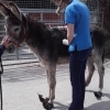 ISPCA appeals for information about a neglected donkey