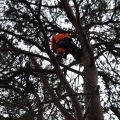Joint operation to rescue a cat stuck in a tree for six days