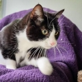 The ISPCA is appealing for new homes for over 100 cats currently in its care