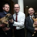 The Animal Health and Welfare Act: one year on