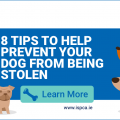 ISPCA tips to help prevent your dog from being stolen