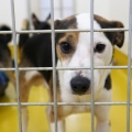 ISPCA appeals for loving homes for 9 rescued dogs