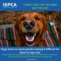 ISPCA advice to keep your pets safe in hot weather