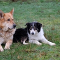 ISPCA appeals for a home for pair of dogs left abandoned when owners moved away