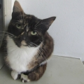 44 cats surrendered to the ISPCA looking for good homes