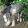 ISPCA seize malnourished horse from waste ground in Bray