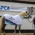 ISPCA celebrates continued partnership with Horseware Ireland during World Animal Week