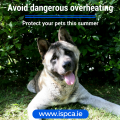 Avoid dangerous overheating and protect your pets this summer