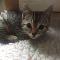 Tiny kitten rescued by ISPCA near busy road in Wicklow