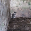 Cork Man pleads guilty to offences under the Animal Health and Welfare Act
