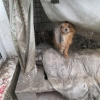 Three emaciated dogs rescued by ISPCA from filthy garden