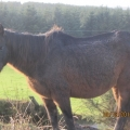 Donegal man convicted of cruelty to eleven horses