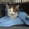 ISPCA rescue kitten with severe burn wound