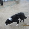 Donegal man pleads guilty to animal welfare offences