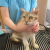 Emaciated and dehydrated cats rescued from serious neglect