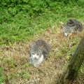 Feral Cat Awareness Week 8th – 14th August 2016