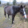 Wicklow man convicted under the Animal Health and Welfare Act