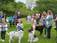 A great day at the Scruffs Dogs Show at Belvedere House and Gardens