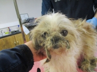 ISPCA remove eight dogs from terrible living conditions