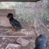 Meath woman disqualified from keeping dogs for two years