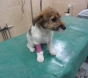 Barbaric act of cruelty on vulnerable puppy