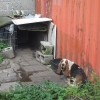 Fifteen animals removed from a property in Carlow
