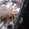 ISPCA rescue two Jack Russell Terrier dogs just in time