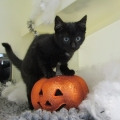ISPCA reminds owners to consider pets' safety this Halloween