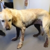 Meath man receives three month suspended sentence after pleading guilty to animal welfare offences