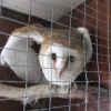 Two owls rescued from substandard conditions