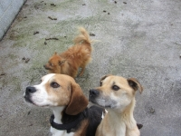 ISPCA Rescues Three Dogs Just in Time