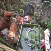Irish Red Setter dogs rescued from unsuitable conditions in a waterlogged back garden
