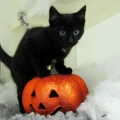 ISPCA tips to protect your pets and wildlife this Halloween