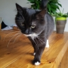 Sooty the mother cat finds a home of her own