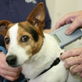Why Micro-chipping your dog is a no-brainer