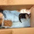 Cat and kittens dumped at ISPCA gates