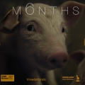 ISPCA host online premiere of award-winning film M6NTHS about a piglet on a factory farm