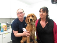 Microchipping is now a legal requirement for all puppies 12 weeks old