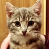 Mistletoe the kitten who appeared on WeekendAM has found a new home