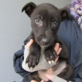 Three puppies dumped in a cardboard box in Portarlington now in ISPCA care