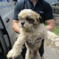 67 dogs &23 puppies being cared for by ISPCA & Dogs Trust after being surrendered to Local Authority