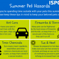 Keep pets safe in hot weather with our summer tips