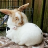 Bunny Thumper found a perfect match is his new home