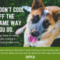 Keep your pets safe in hot weather tips and advice