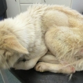 Waterford man convicted of animal welfare offences to a German shepherd dog